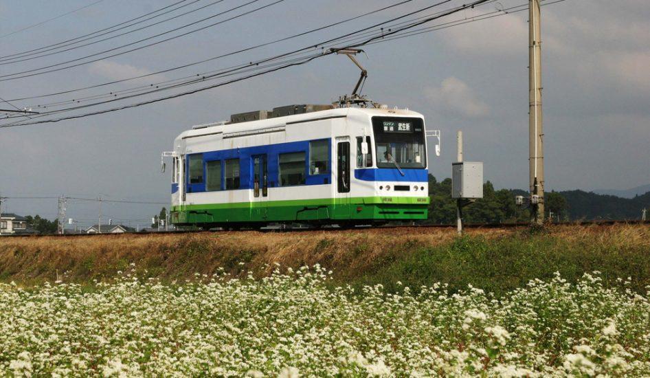 そば畑と福井鉄道